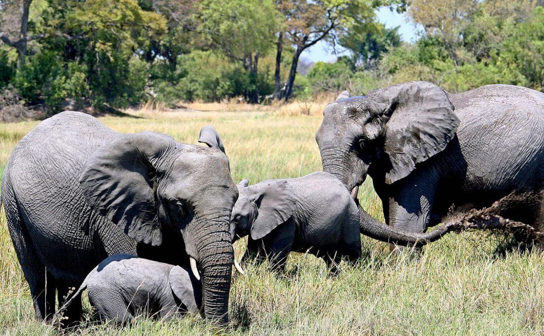 Botswana issues licenses to kill 287 elephants