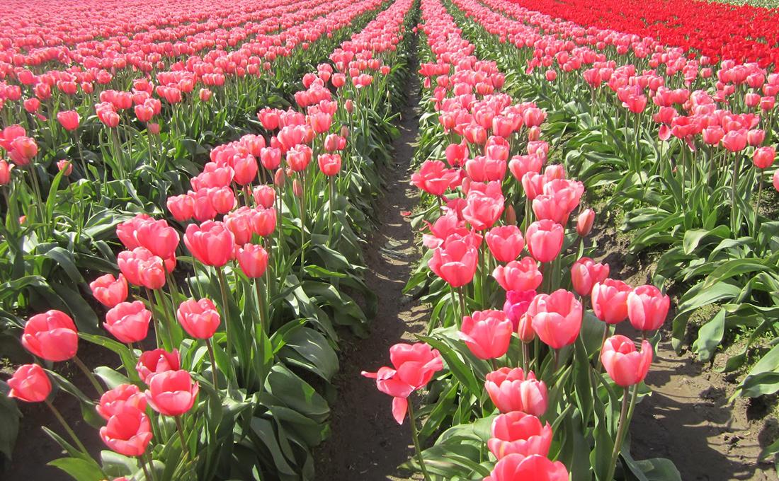 Kenya to receive Ksh.650 million from EU for horticulture market