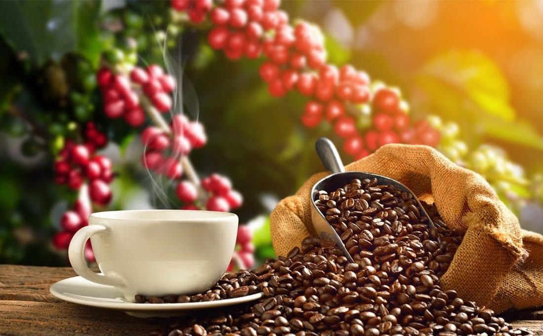 CMA issues licences to 5 coffee brokers