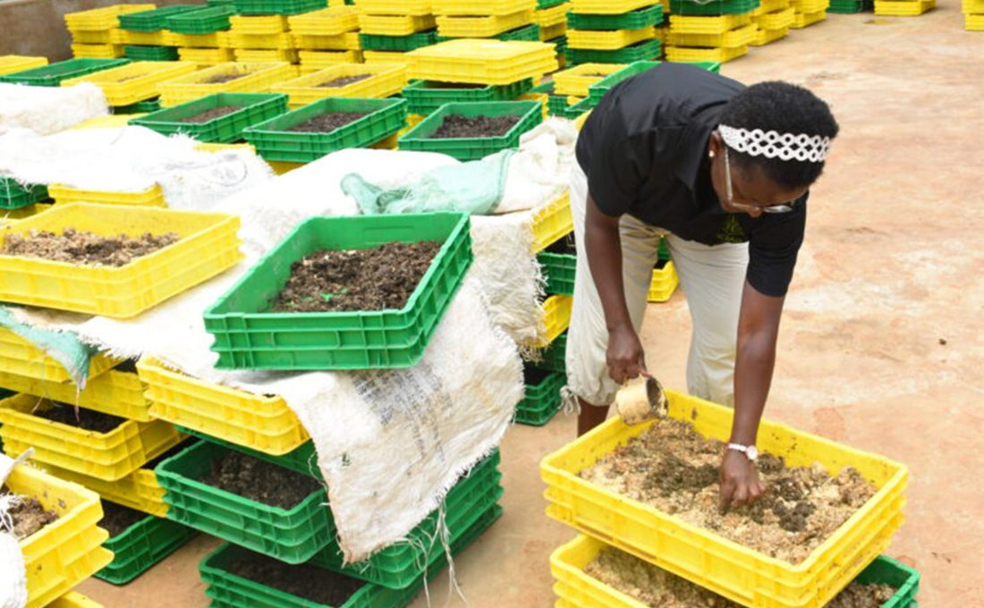 Meru's introduction of 'black soldier flies' wins it global recognition