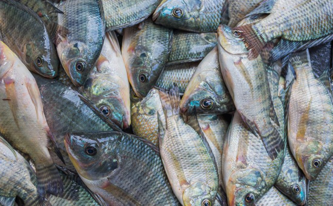 Government commissions fish processing plant in Kakamega