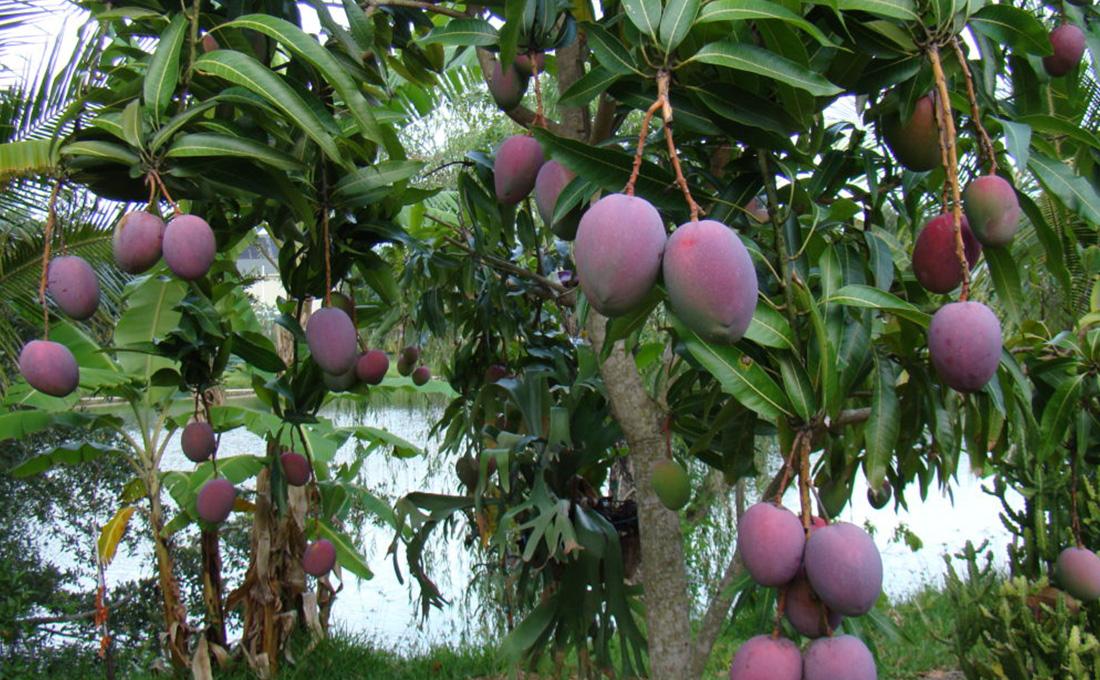 Kitui County commissions Ksh.20 million fruit processing plant