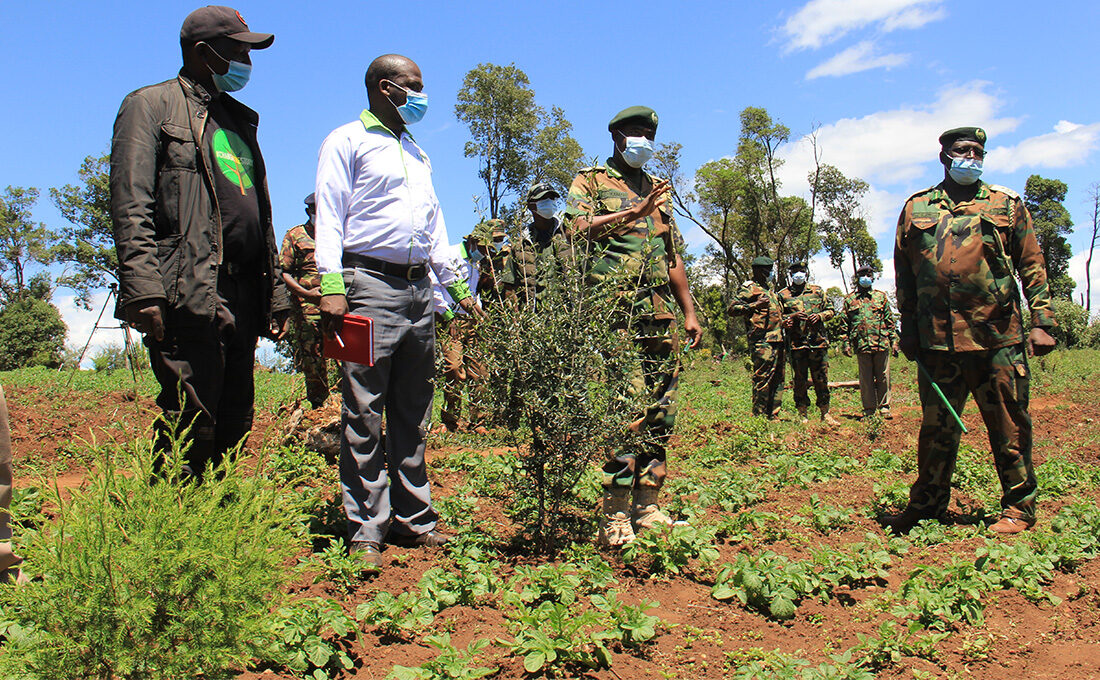 KFS to leverage on adopting a forest program to expand forest cover