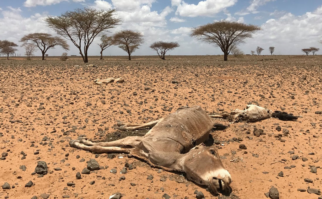 Met Department warns of food, water and pasture shortage