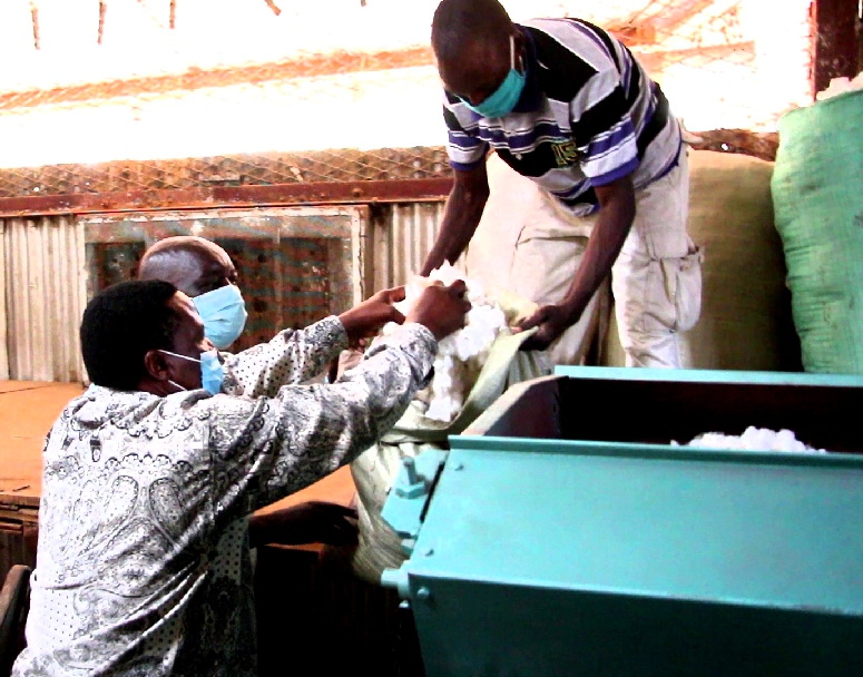 Busia cotton farmers decry low buying price